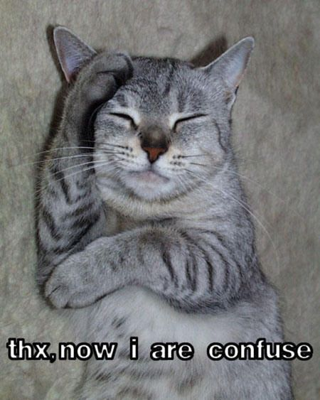Confused Cat Meme 1 610x457a Humorous Animals Pinterest Funny