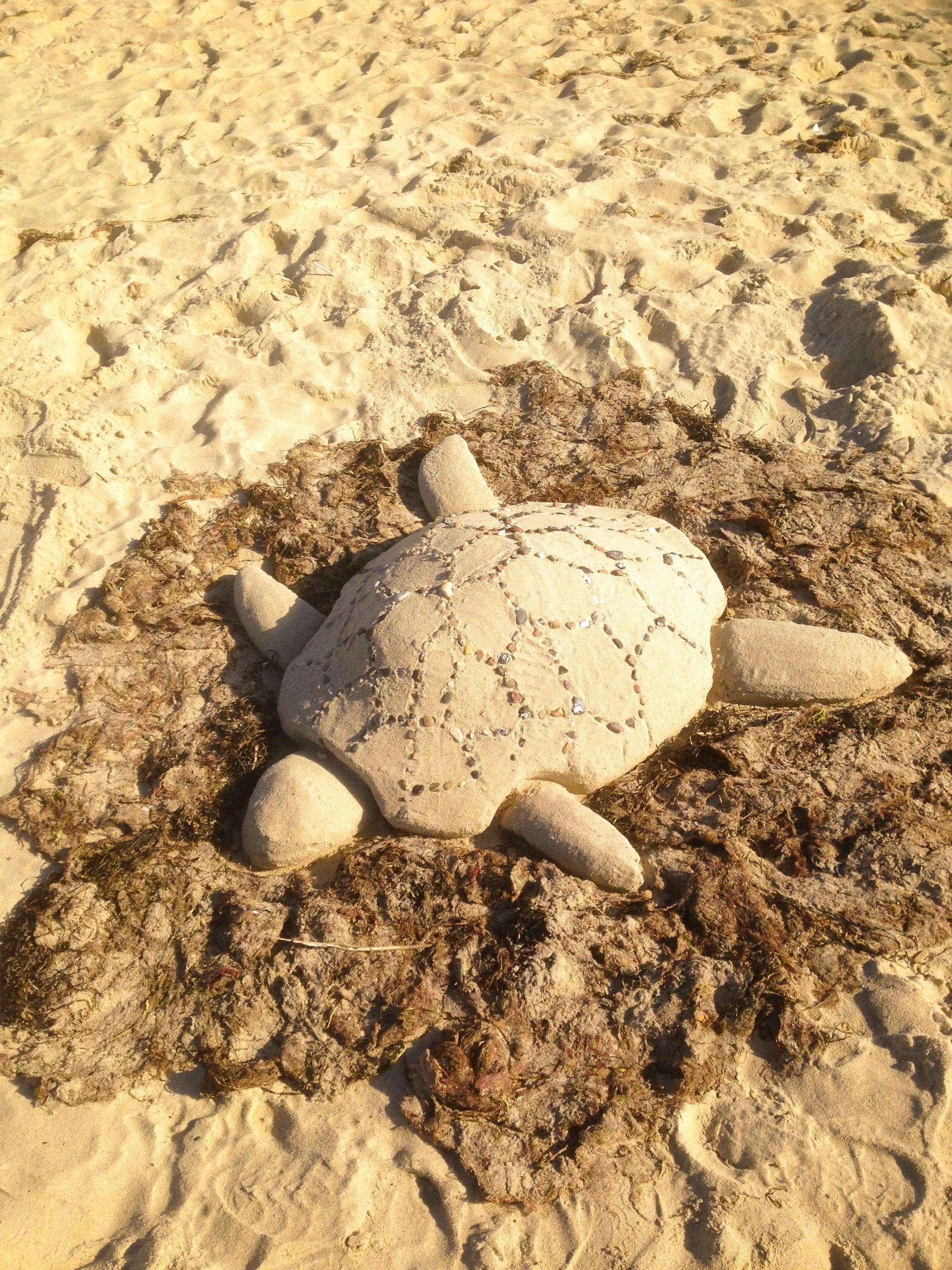 Schildkröten an der Ostsee