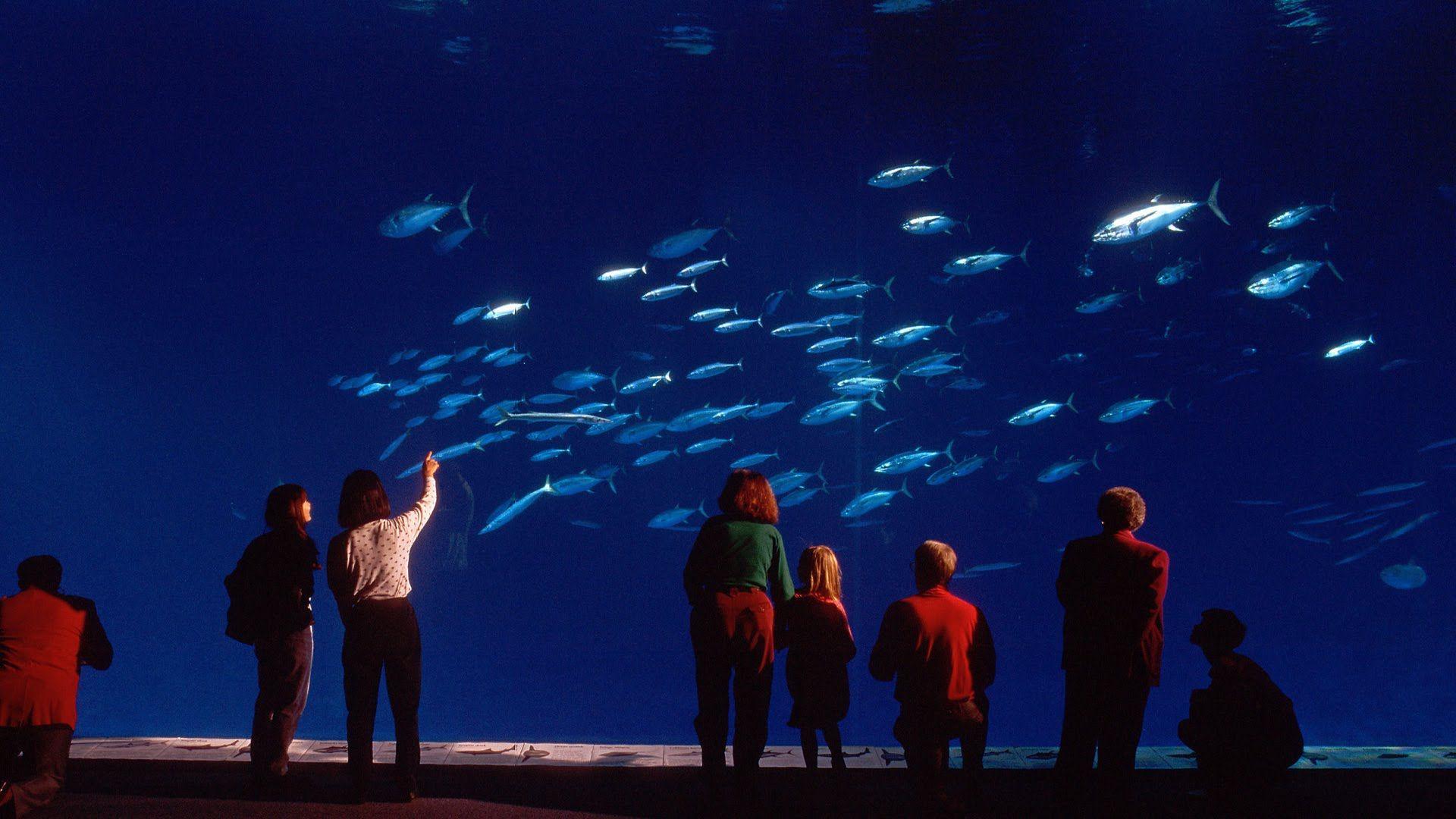 0d9722853f5025a8a1e9cde0d4928b1b Frais De Aquarium Tropical Schème