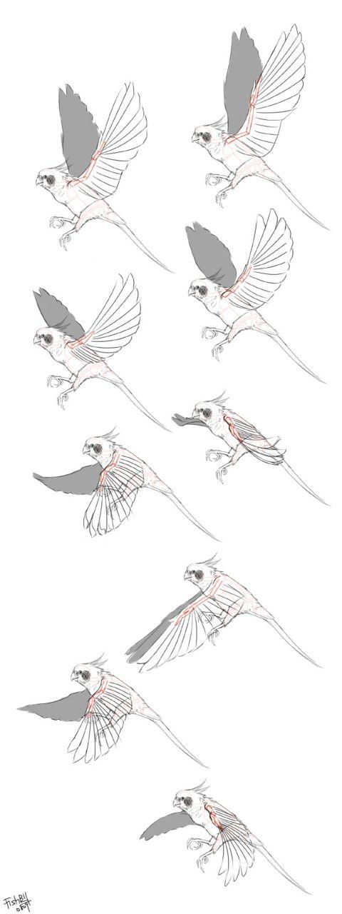 Dessiner Un Oiseau En Vol Animation Drawings Bird