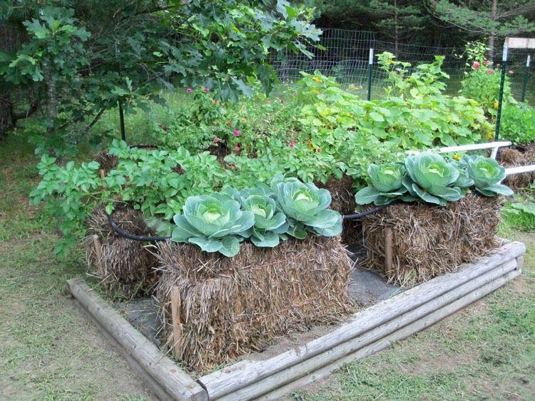 gärtnern auf strohballen: unabhängig vom untergrund und, Gartengerate ideen