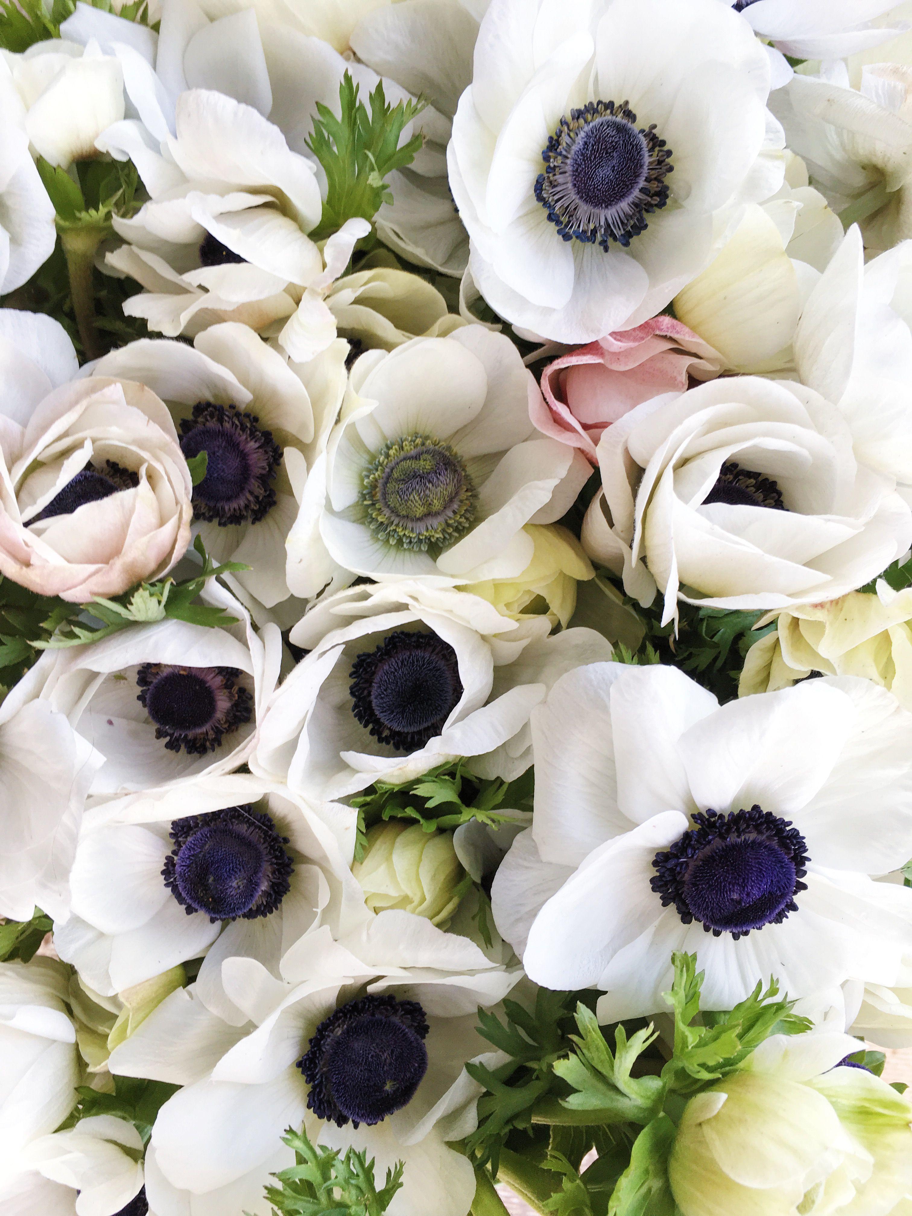 White Anemones With Black Eyes Grown At Love N Fresh Flowers Flower Farm May Flowers April Flowers