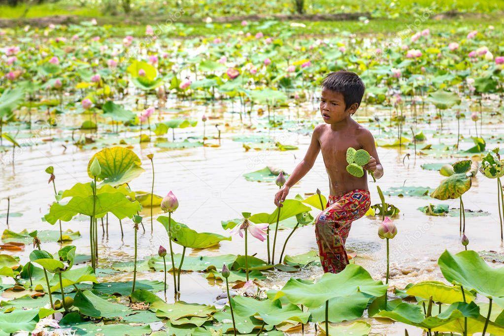 Siem Reap Cambodia June 2018 Boy Lotus Field Lotus Farm - Stock Photo , #Ad, #June, #Cambodia, #Siem, #Reap #AD
