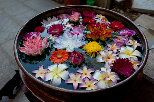 water lilies floating in a bowl
