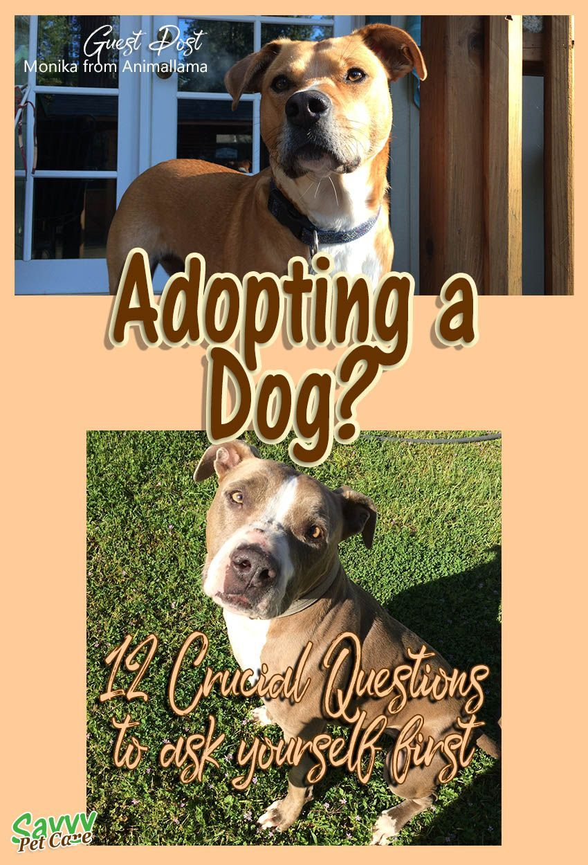 Adopting a dog 12 crucial questions to ask yourself dog