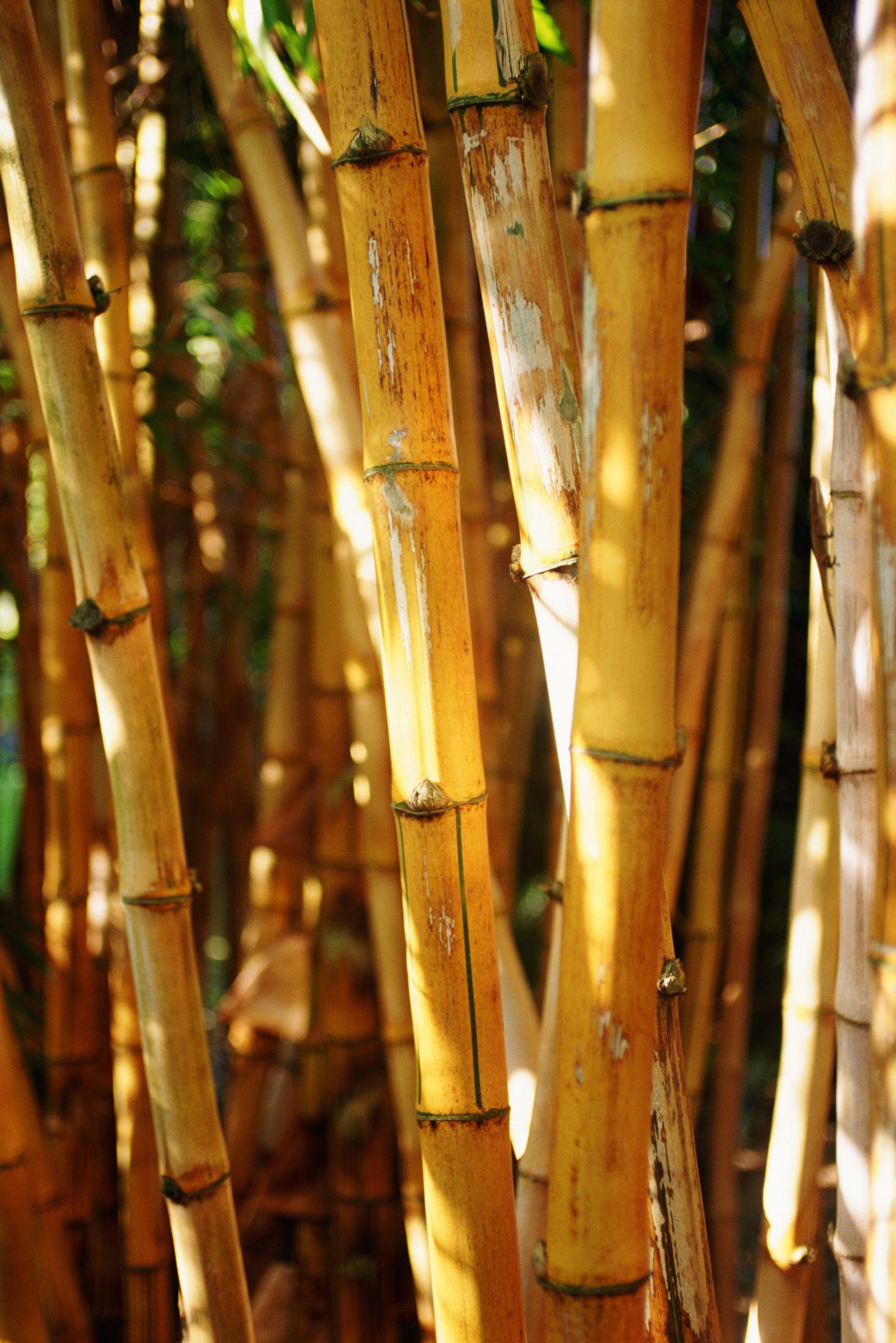 C Mo Hacer Manualidades Y Decoraci N De Bamb Para Tu Hogar  ~ Cañas De Bambu Verdes Para Decorar