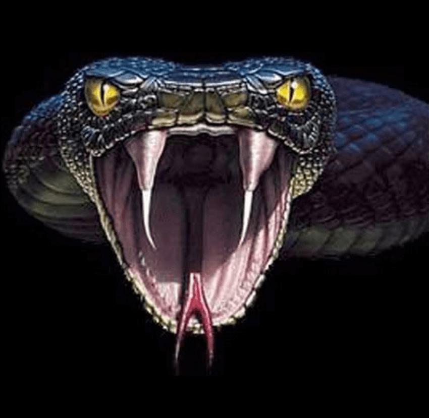 Anaconda Snake Png Transparent Image Full Hd Vector Clipart Vector Clipart Vector Photo Image