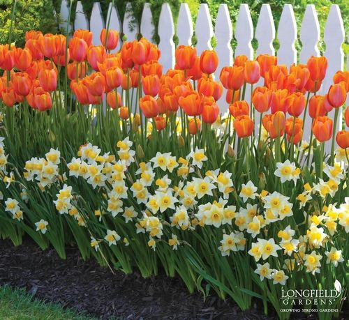 Spring Flowers And Yard Landscaping Ideas 20 Tulip Bed: Garden Bulbs, Plants, Bulb Flowers
