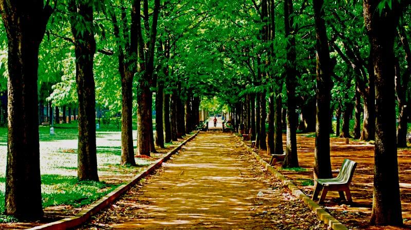 Cubbon Park Banglore Places To Visit In Bangalore For Couples Places To Visit Travel And Tourism Tourism