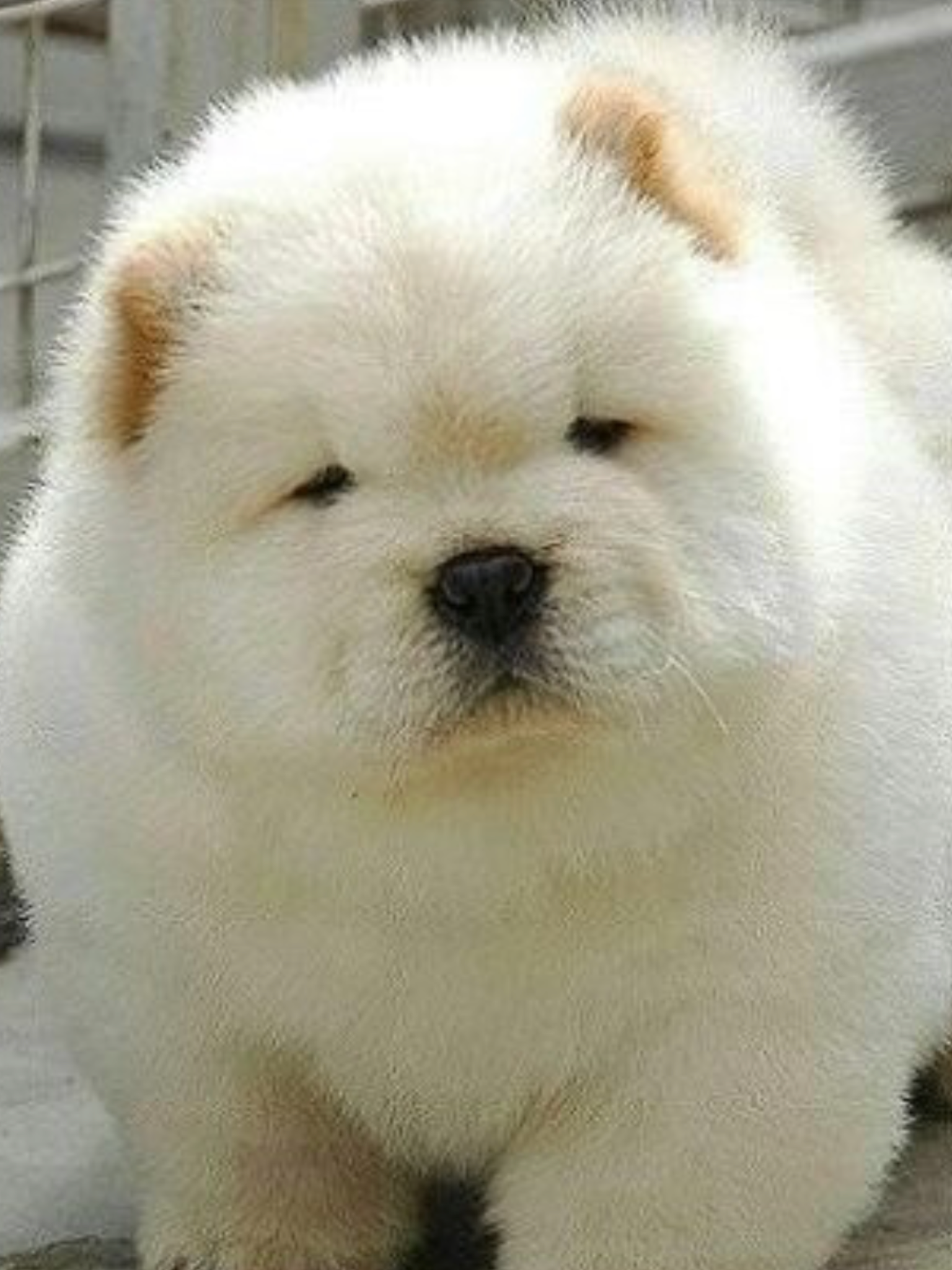 Fluffy overload (With images) Cute animals, Pets, Animals