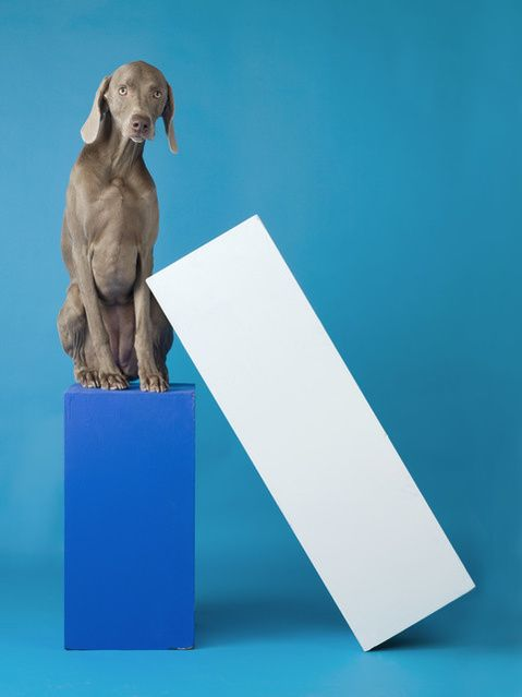 William Wegman Lean To 2014 Available For Sale Artsy William Wegman Art Art Museum