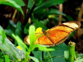 Farfalla, foto di Cosimo Antitomaso