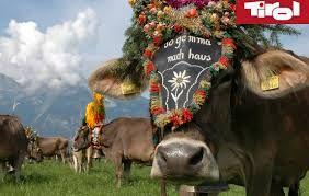 Resultat De Recherche D Images Pour Transhumance Auvergne Tirol Tyrol Tyrol Austria