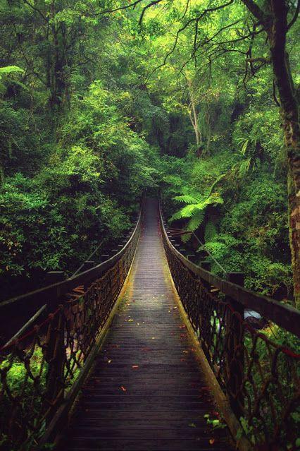 Die Brücke im Wald...