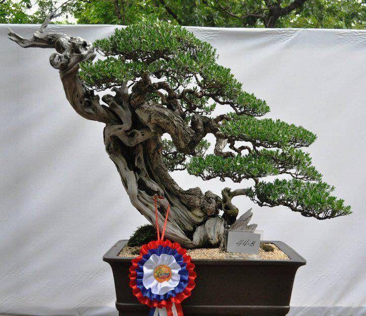 Bonsai Haus bonsai bonsai bonsai