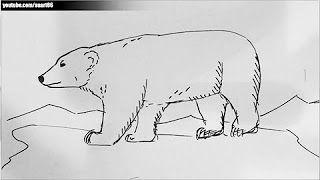 Como Dibujar Un Oso Polar Youtube Como Dibujar Un Oso Oso Polar Como Dibujar