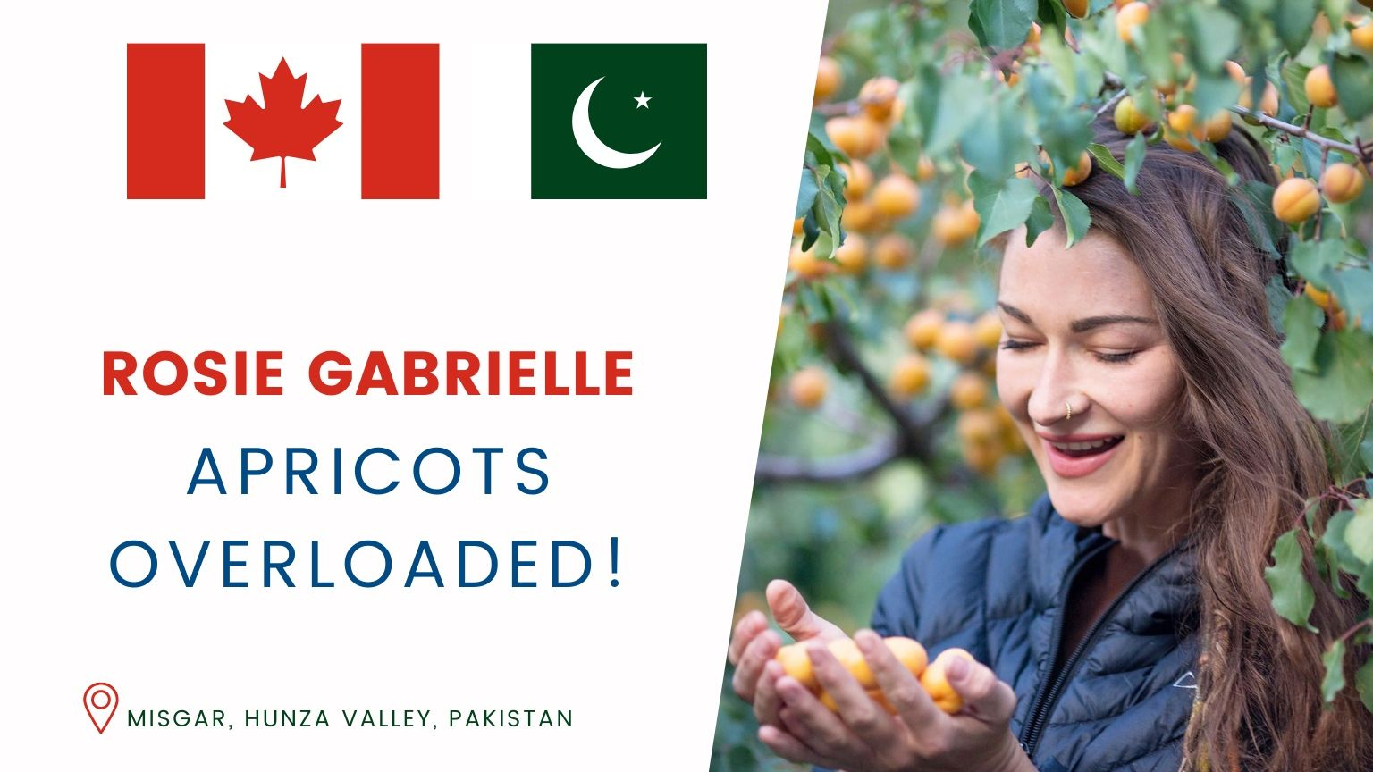 APRICOTS Overloaded | Rosie Gabrielle