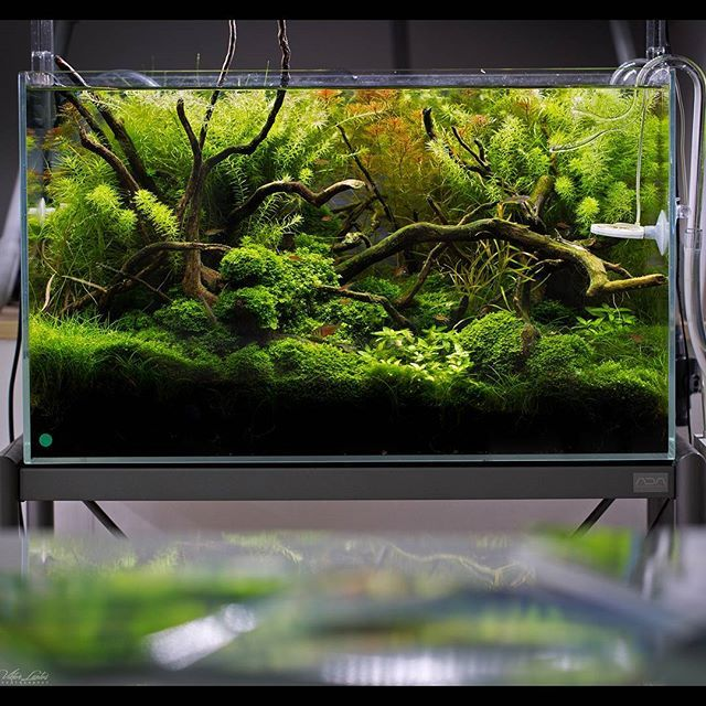Great #aquascape #aquascaping #green #plants #planted #plan #nature #design