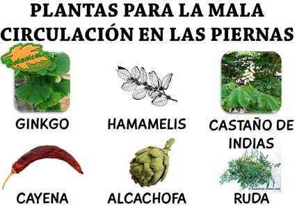 Plantas medicinales para la mala circulacion en las - Medias para la circulacion ...