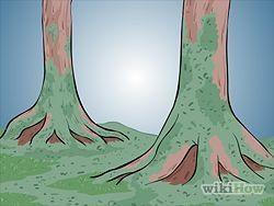 Grow Moss Step 4.jpg