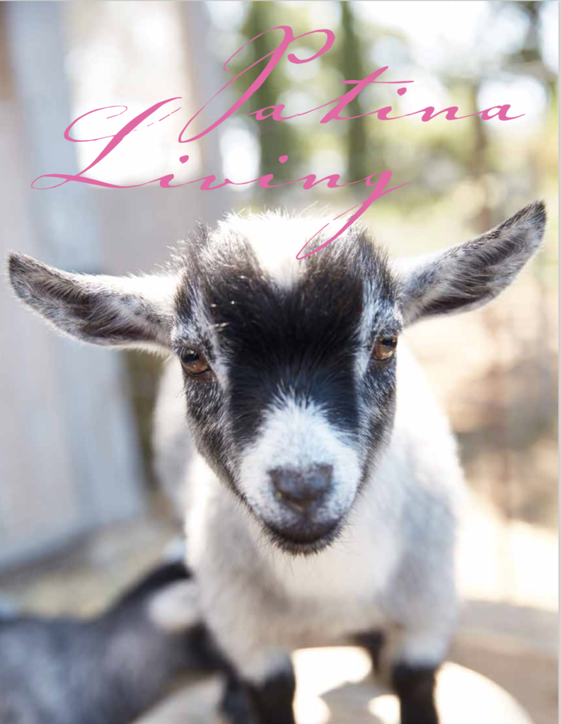 A New Website A New Book and a Couple of New Mini Goats