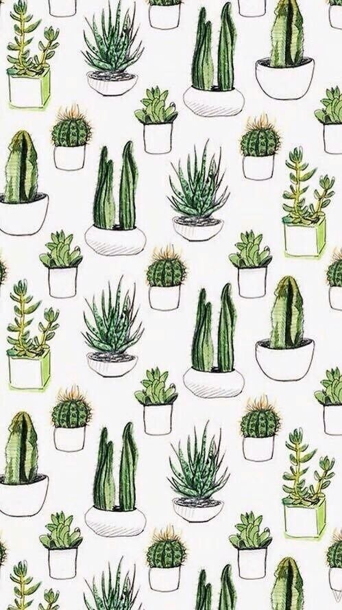 b7f18e7c5d2 Cactus succulents iPhone wallpaper background lockscreen