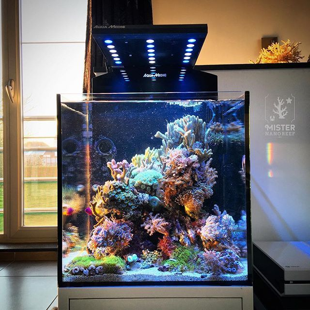 Saltwater Fish Tanks, Aquarium