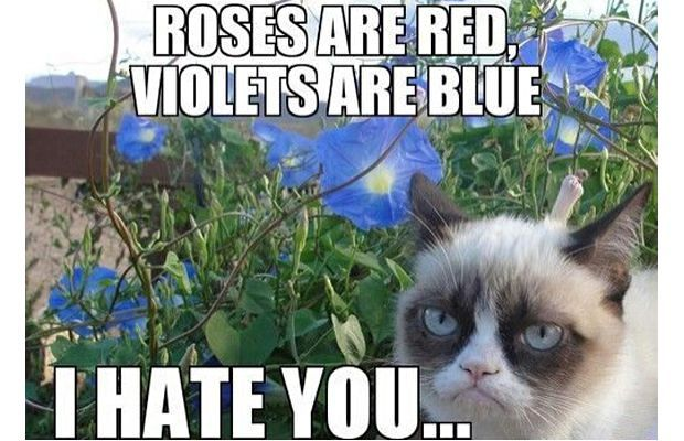 grumpy cat meme 31 great grumpy cat memes that will make you less grumpy