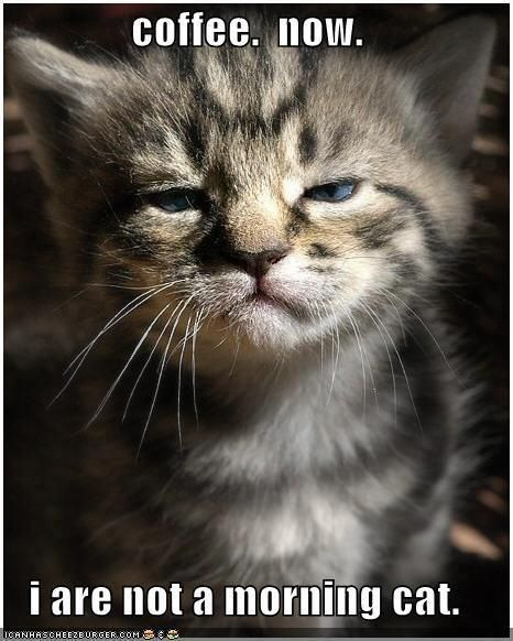 15 cats that are very disappointed in you c o f f e e pinterest bathroom mirrors bagels and brighton