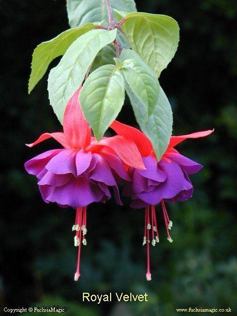Pin On Garden Flowers Plants Trees