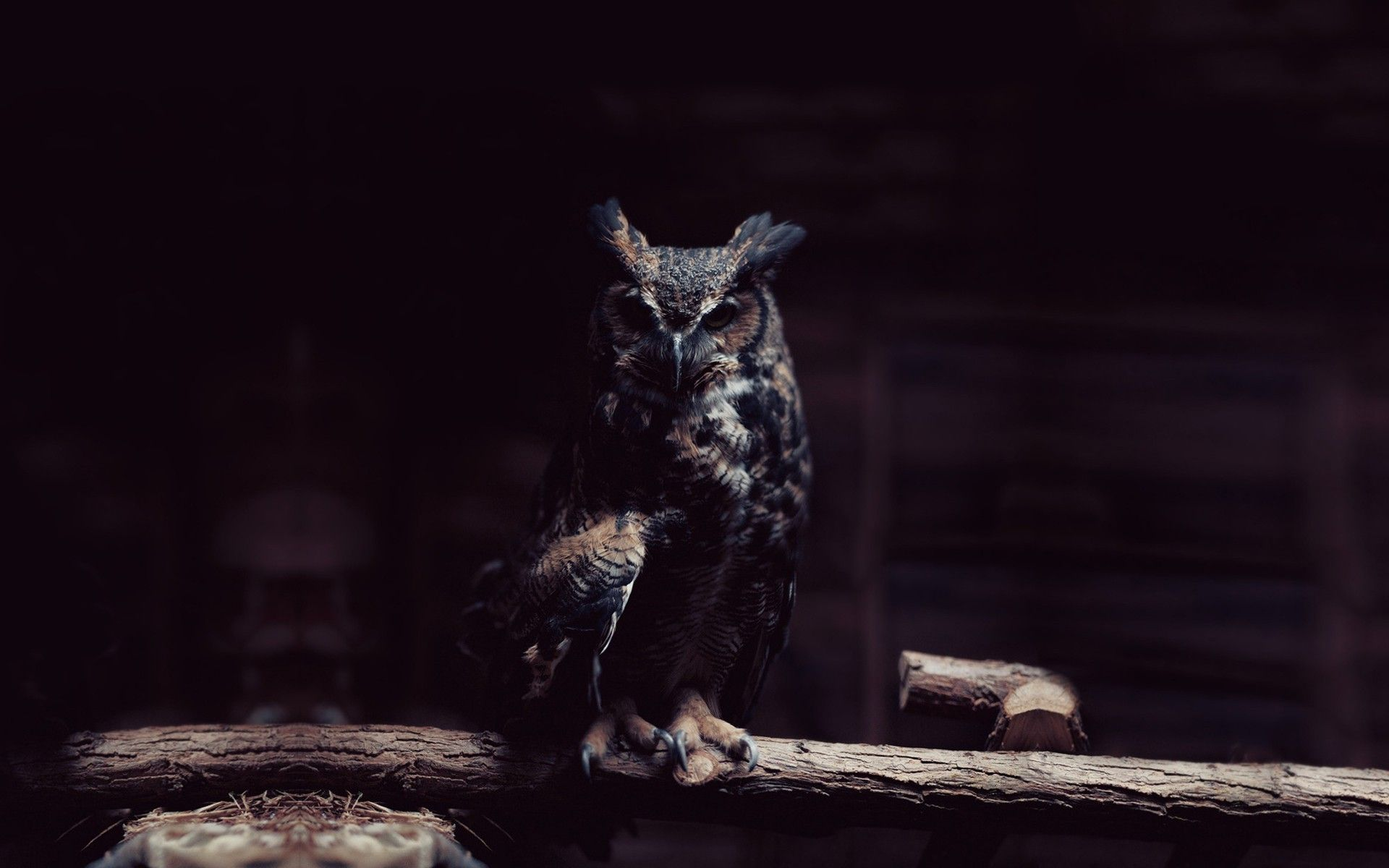 Owl Wallpaper HD World's Greatest Art Site Owl