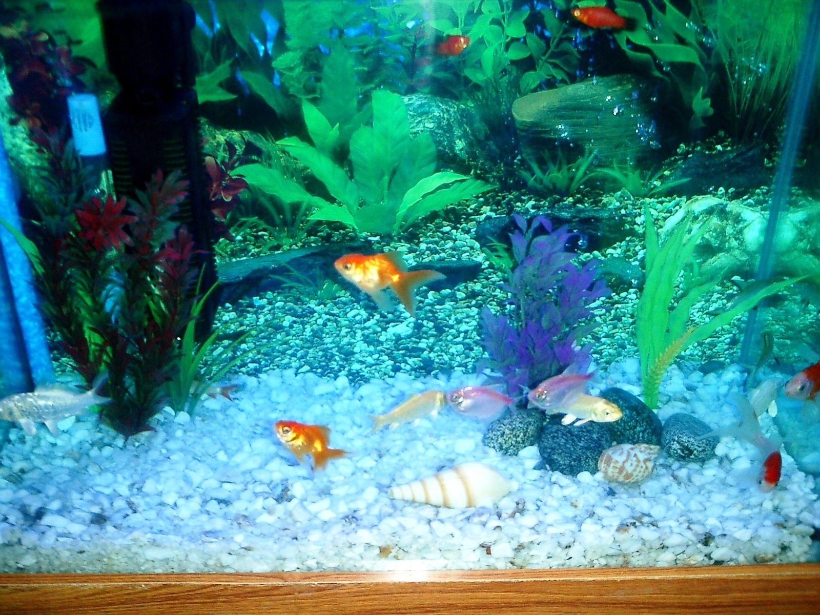 0da083bb0df3e6ab0d88cba40e42ca27 Frais De Aquarium Tropical Schème