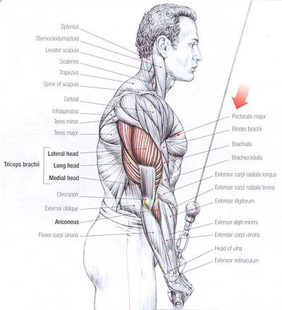 6 Arm Exercises To Explode Your Triceps Heads Upper Body