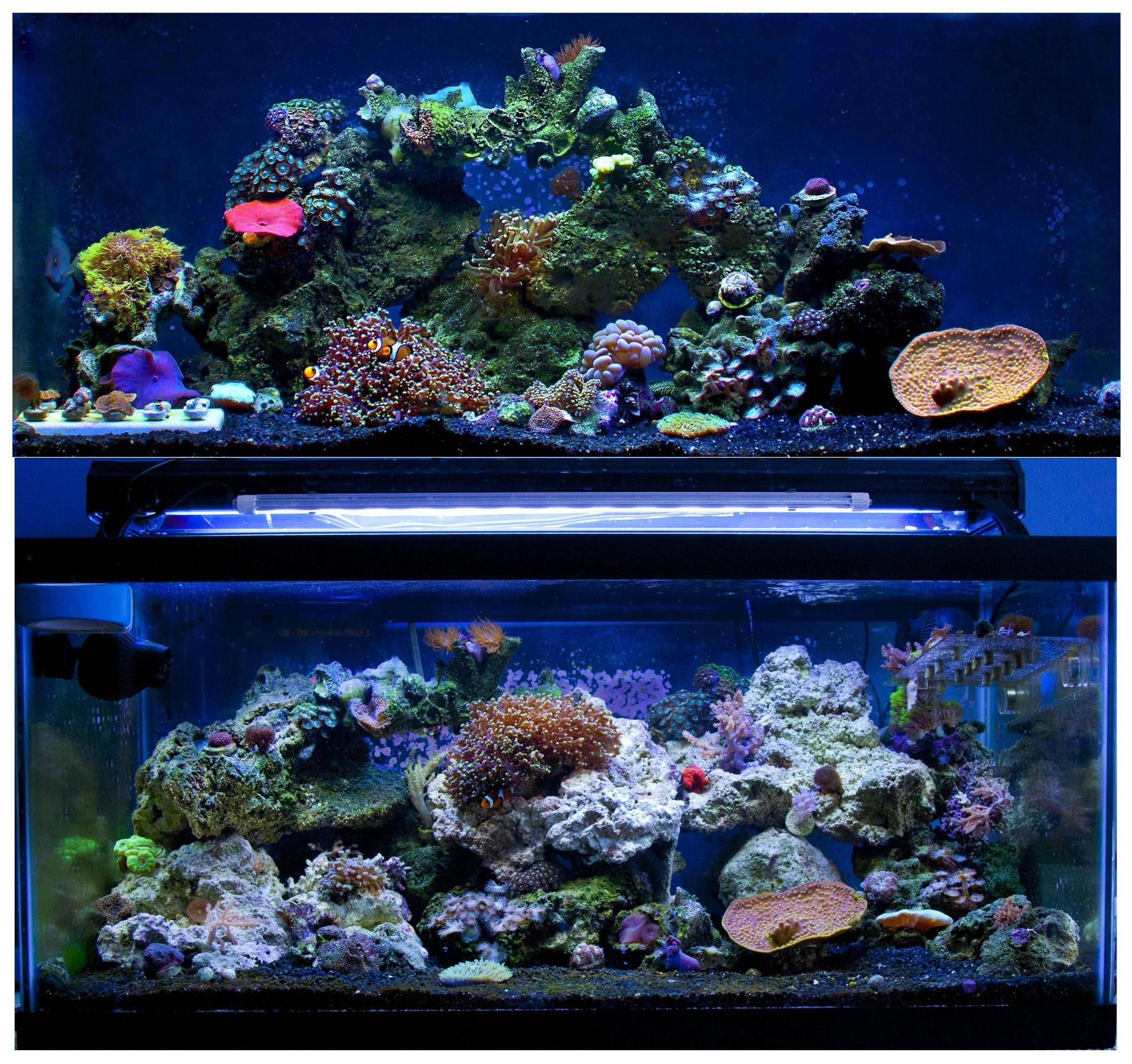 before and after shot of a reef tank remodel black substrate