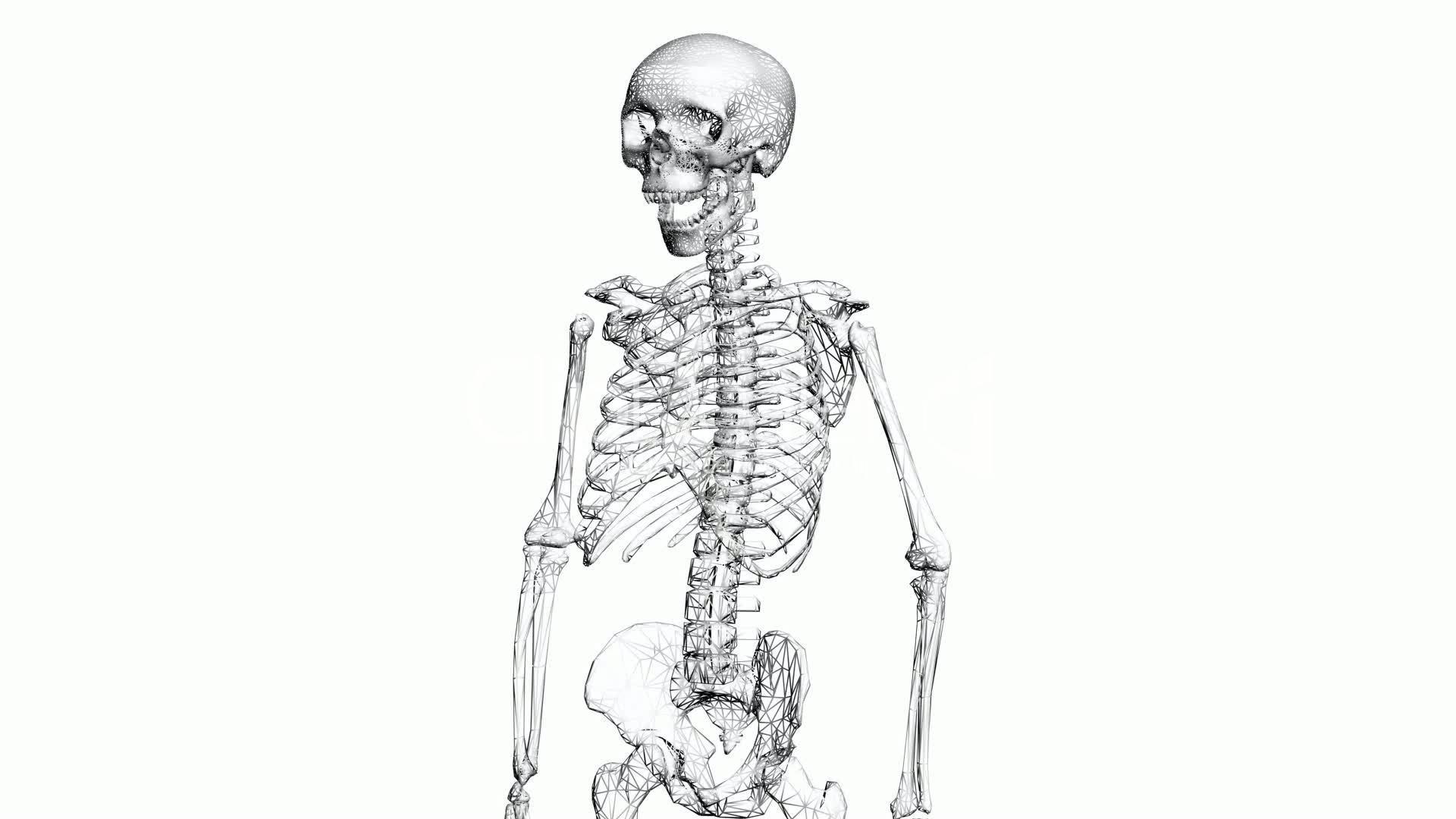 2--1330475-Rotation of 3D skeleton.anatomy,human,medical,body,skull ...