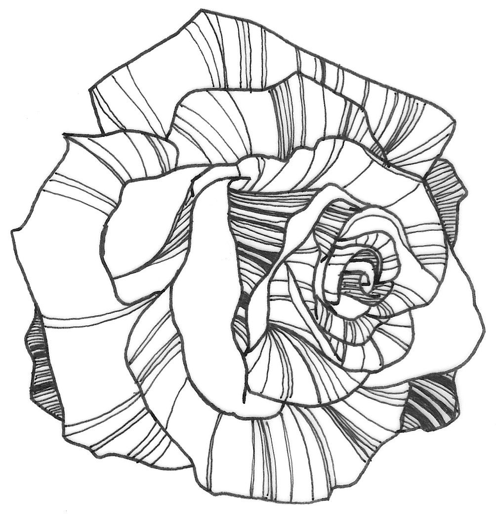 Line Drawing Of Rose Plant : Nicole illustration flower power rose coloring page