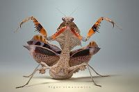 Curiosidades del reino animal: Insectos asombrosos - Las fotografías de Igor Siwanovicz