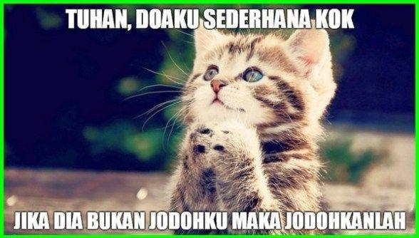 Quotes Gambar Kucing godean.web.id