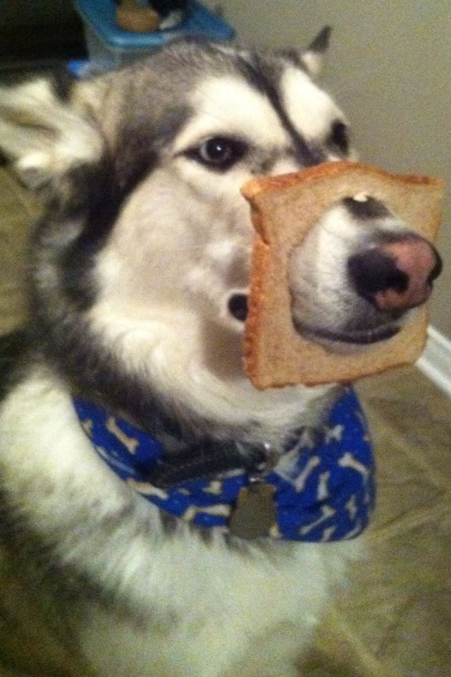 in bread dog this is totally something i would do to our poor dogs ha ha