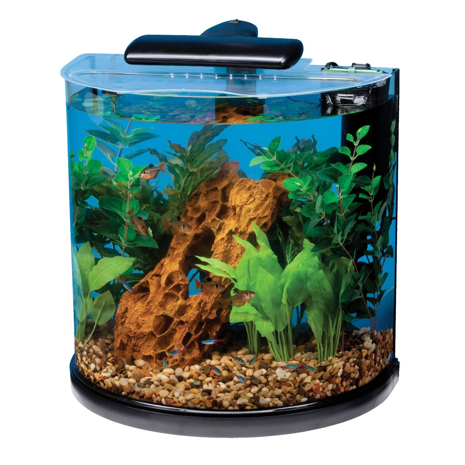 Cool Aquariums For Sale Amazoncom Tetra 29234 Half Moon Aquarium Kit 10 Gallon Pet