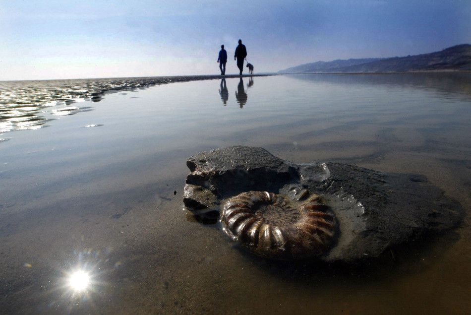 Fossils on the Jurassic Coast. By: Richard Austin