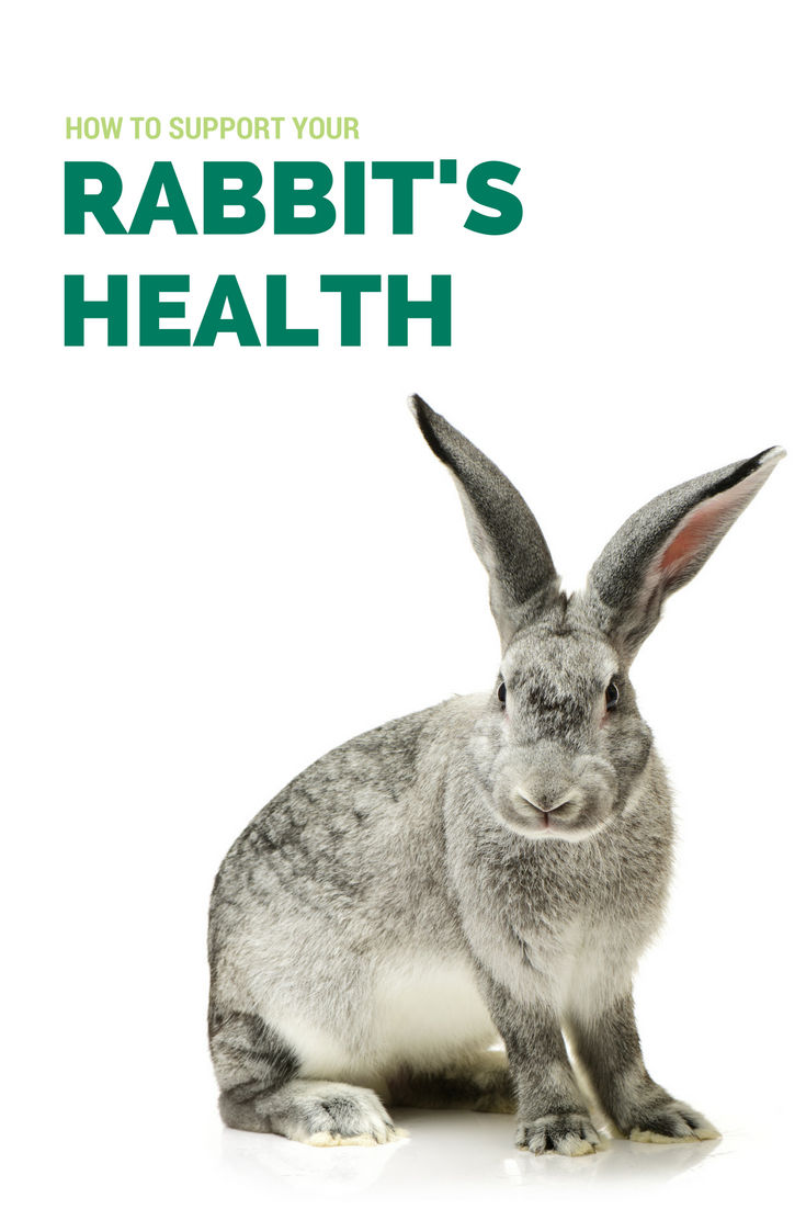 Many Rabbit Health Problems Are A Result Of Nutrition And Digestive Issues Dental Issues Or Obesity What Symptoms Should You Wat Health Healthy Pets Pet Care