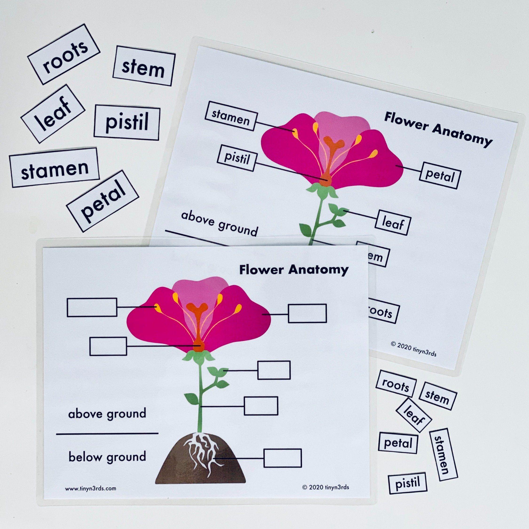 Flower anatomy art lesson plan art lesson plans art