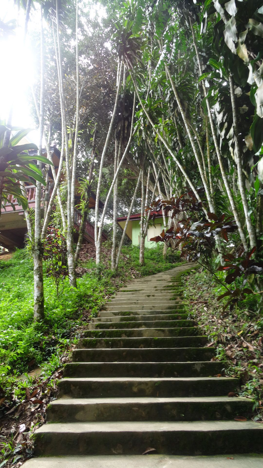 Stairs from magic garden #thailand #kohsamui