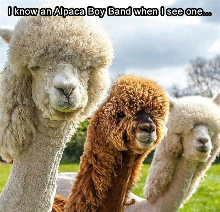 Morning Funny Animal Picture Dump 24 Pics Funny Animals Cute Funny Animals Funny Animal Pictures