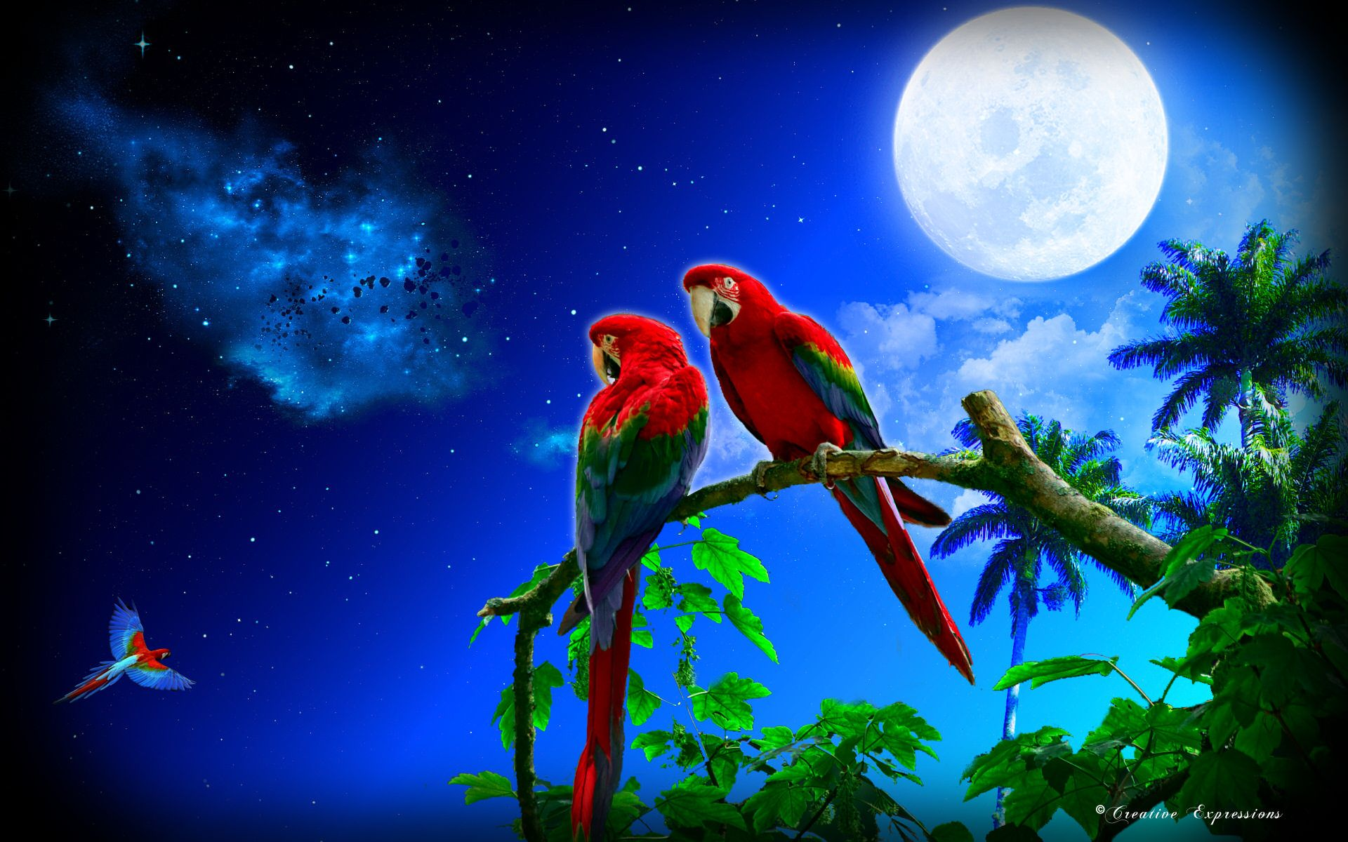 a parrots moon art nebula trees macaws hd wallpaper beautiful