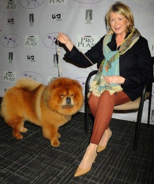 Martha Stewart S Chow Chow Ghengis Khan Took Best In Breed 2012