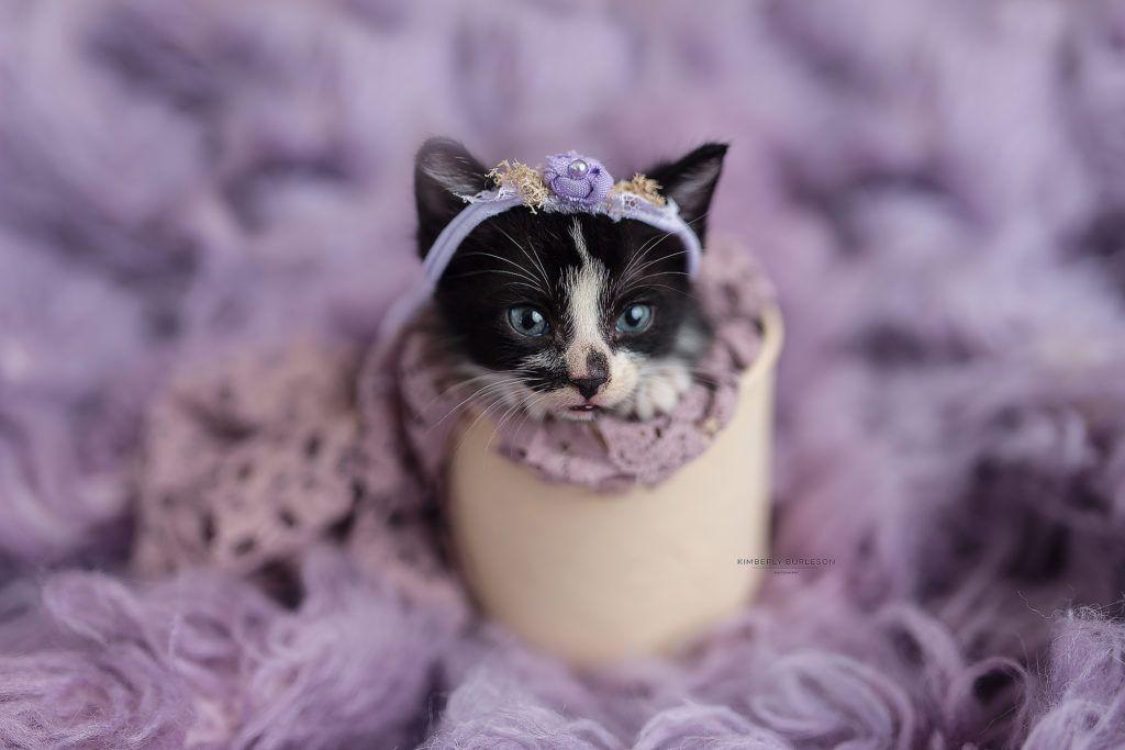 Newborn Kitten Photoshoot Newborn Kittens Kittens Cutest