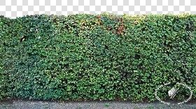 Textures Texture Seamless Cut Out Hedge Texture Seamless 17683