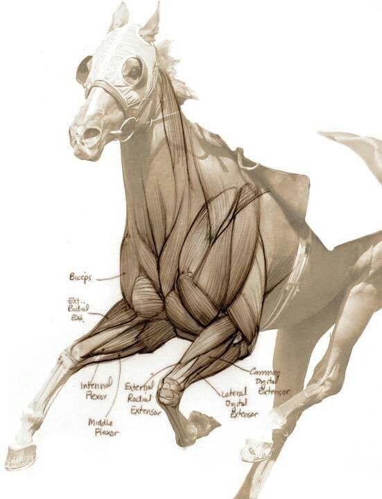 C05a812d74c86f29b263e9de8330a744g 551720 Animals Anatomy